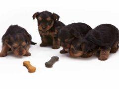 Pies uczulony na mięso - co robić?
